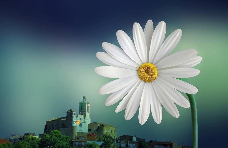 llagostera en flor